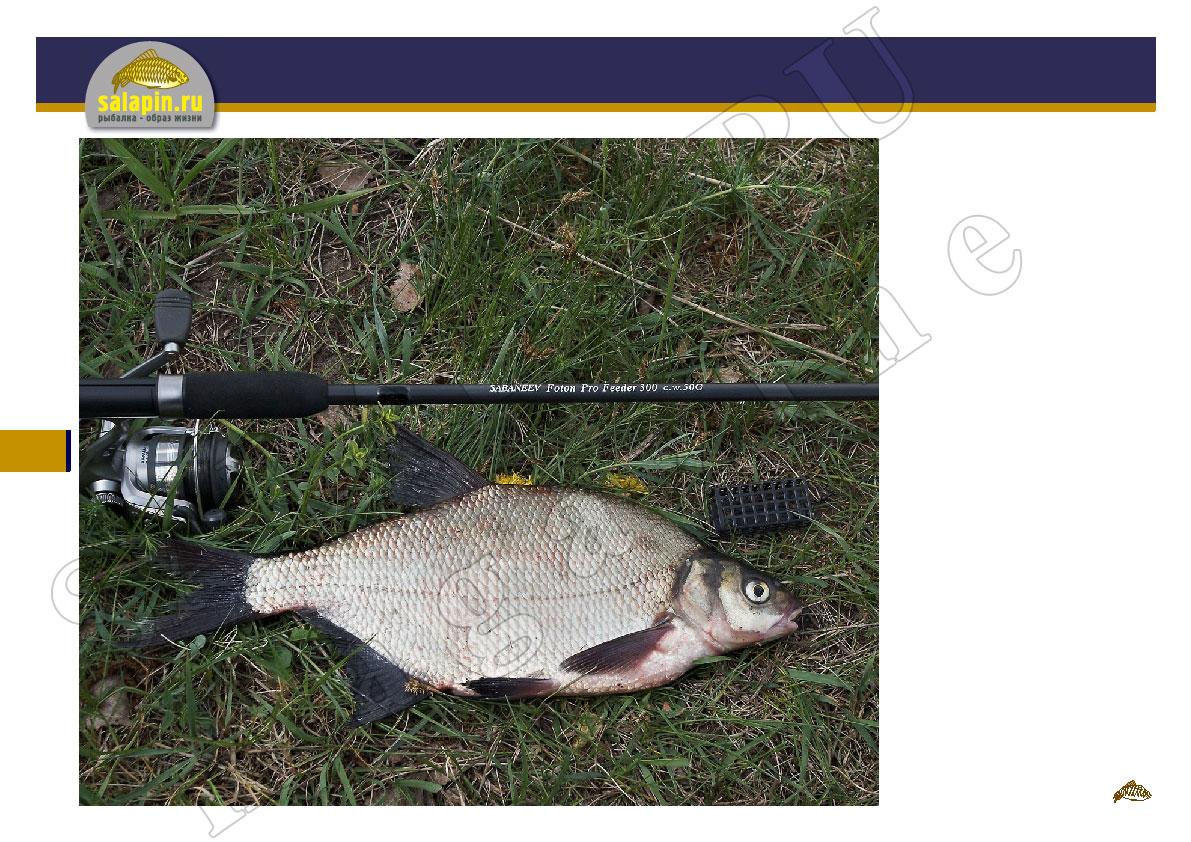 рыбалка рецепт салапинской каши