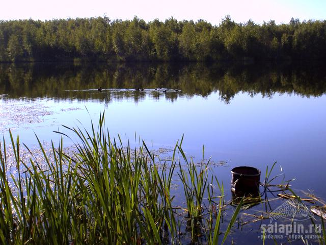 рыбалка на пруду садки