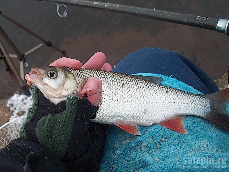 волковское озеро рыбалка