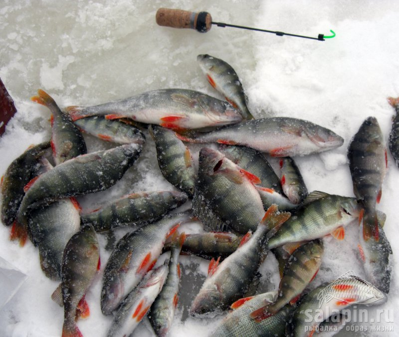 рыбалка пермский край окунь