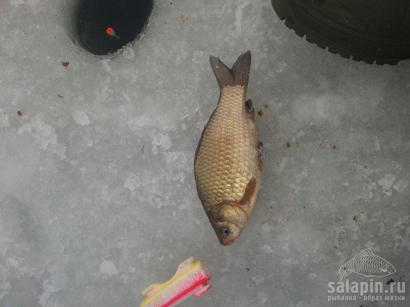 манка для рыбалки на леща