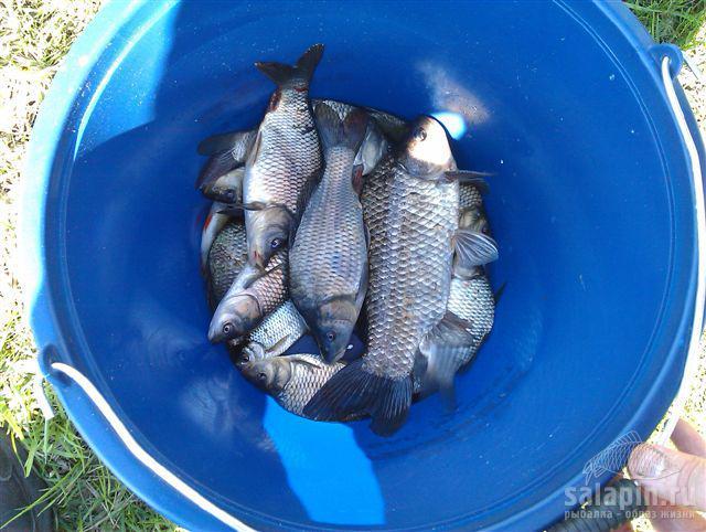 рыбалка в бейсужке