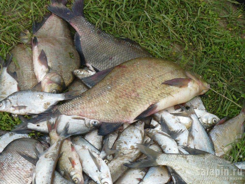 где в коломне ловят рыбу