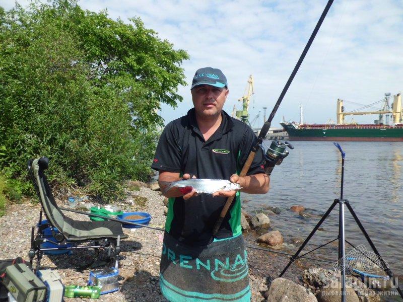 фидерная рыбалка чехонь
