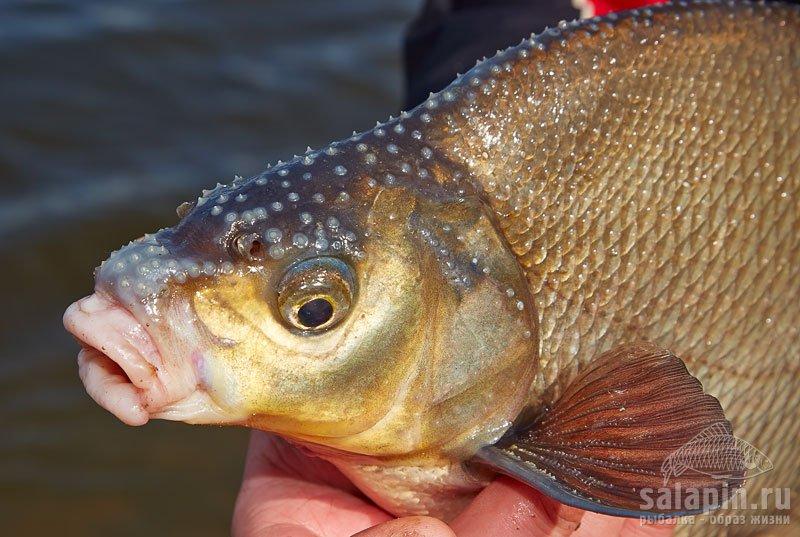 рыбалка в колдаисе весна 2015