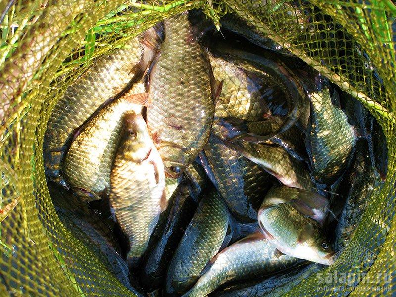 рыболовные снасти в брянске