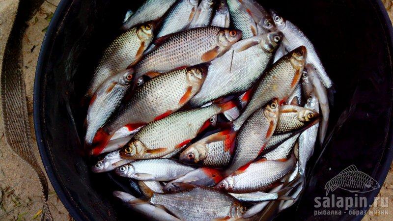 нхнч рыбалка