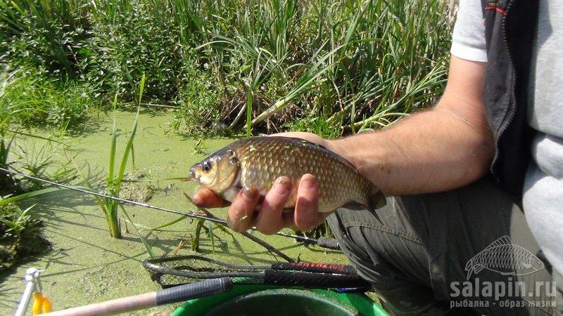 ловля на фидер на озере карп карась