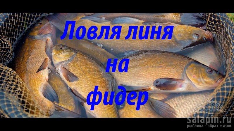 как поймать рыбу на фидер