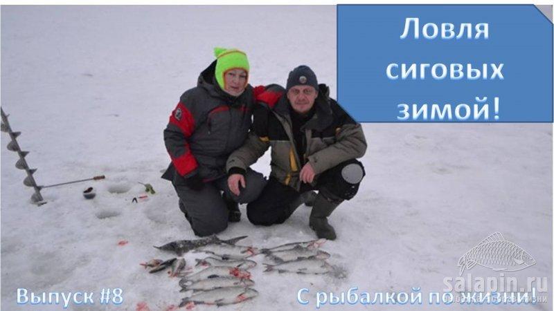 рыбалка на сига сетями