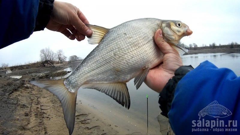 рыбалка на москварике в звенигороде