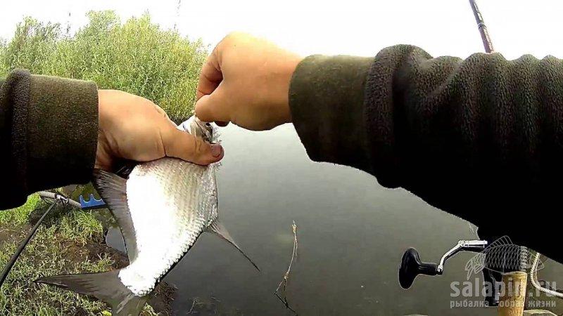 ловля леща на водохранилище летом видео