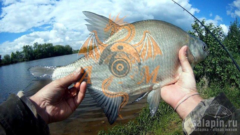 на что клюет рыба в москва реке