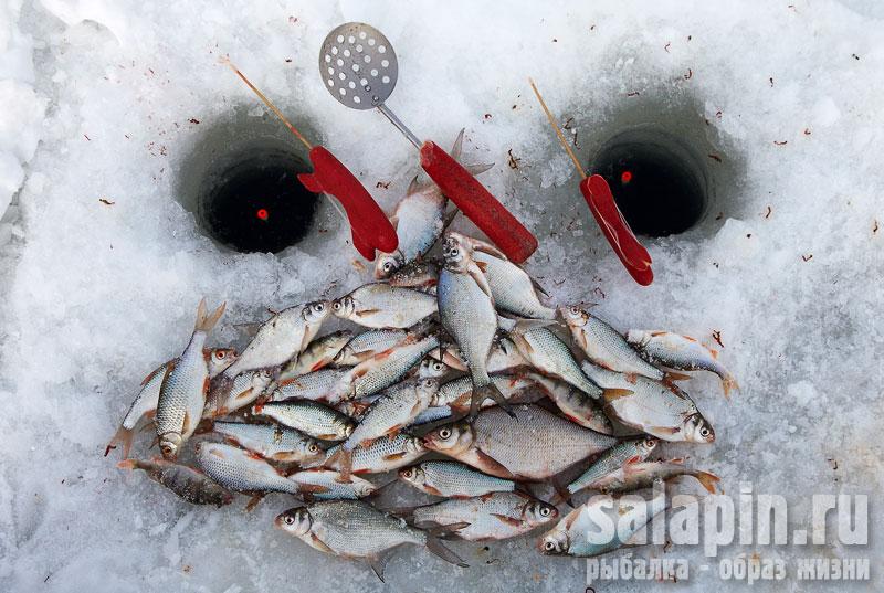 клев рыбы в знаменске астраханской области