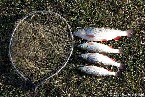 алексинский район рыбалка